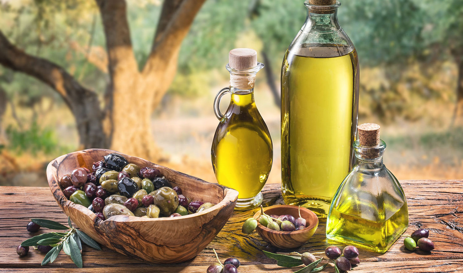 Olive Oil Tourism in Turkey